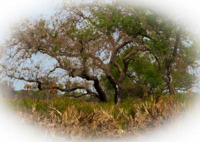 Myakka Wilderness