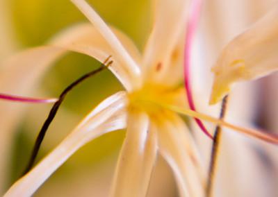 Botanically Speaking